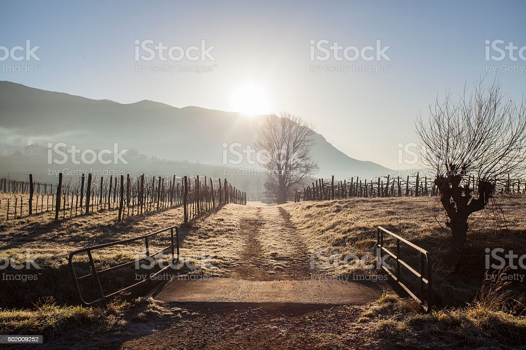 Wine yard in winter stock photo