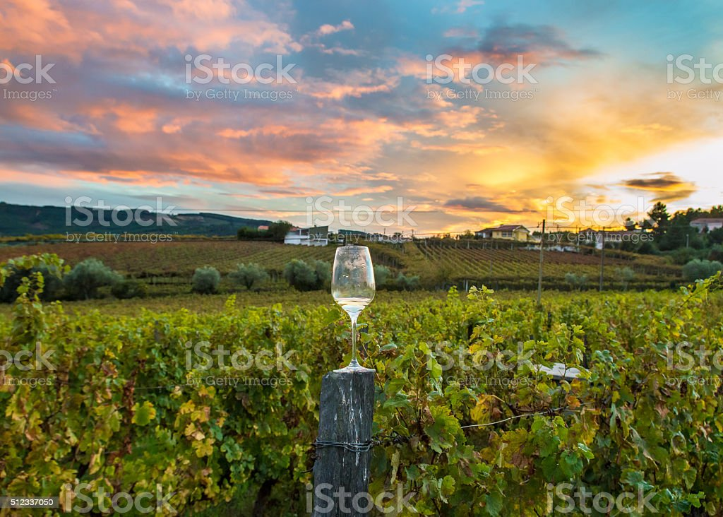 wineglass in a vineyard during a dramatic sunset stock photo