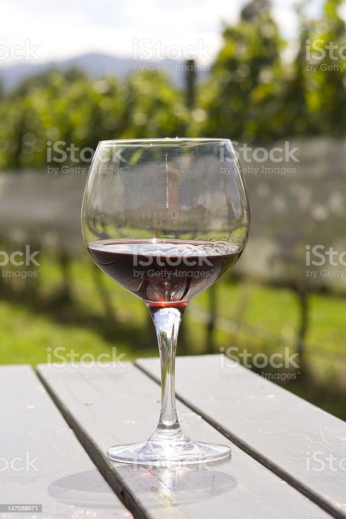 Wineglass with red wine in vineyard stock photo