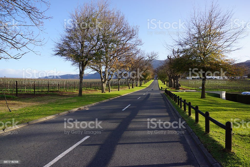 Winelands in South Africa stock photo
