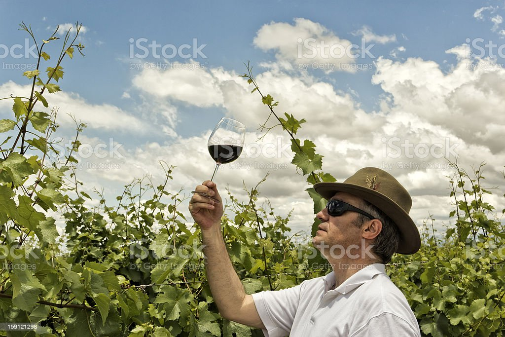 Winemaker royalty-free stock photo