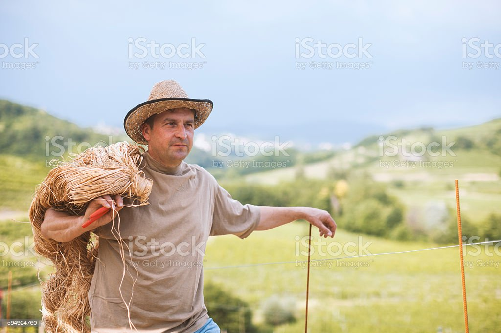 Winemaker with Raffia Fibres stock photo