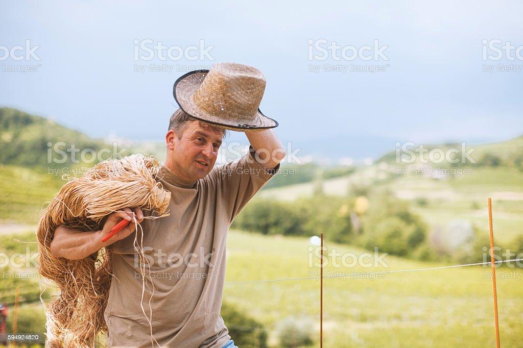 Winemaker with Raffia Fibres stock photo