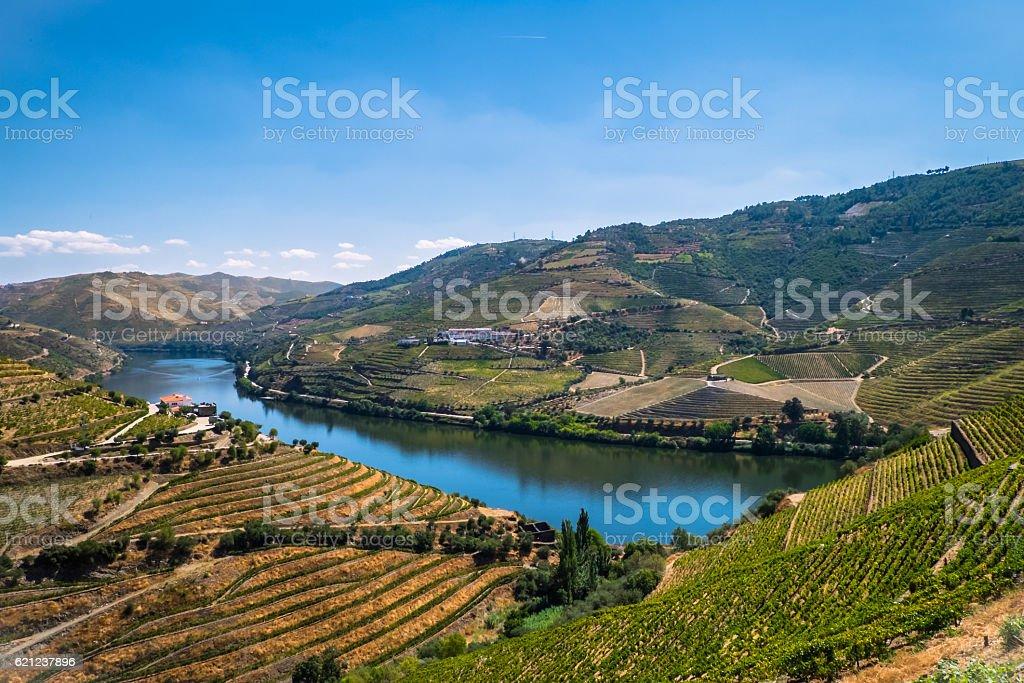 Wineries of Douro stock photo