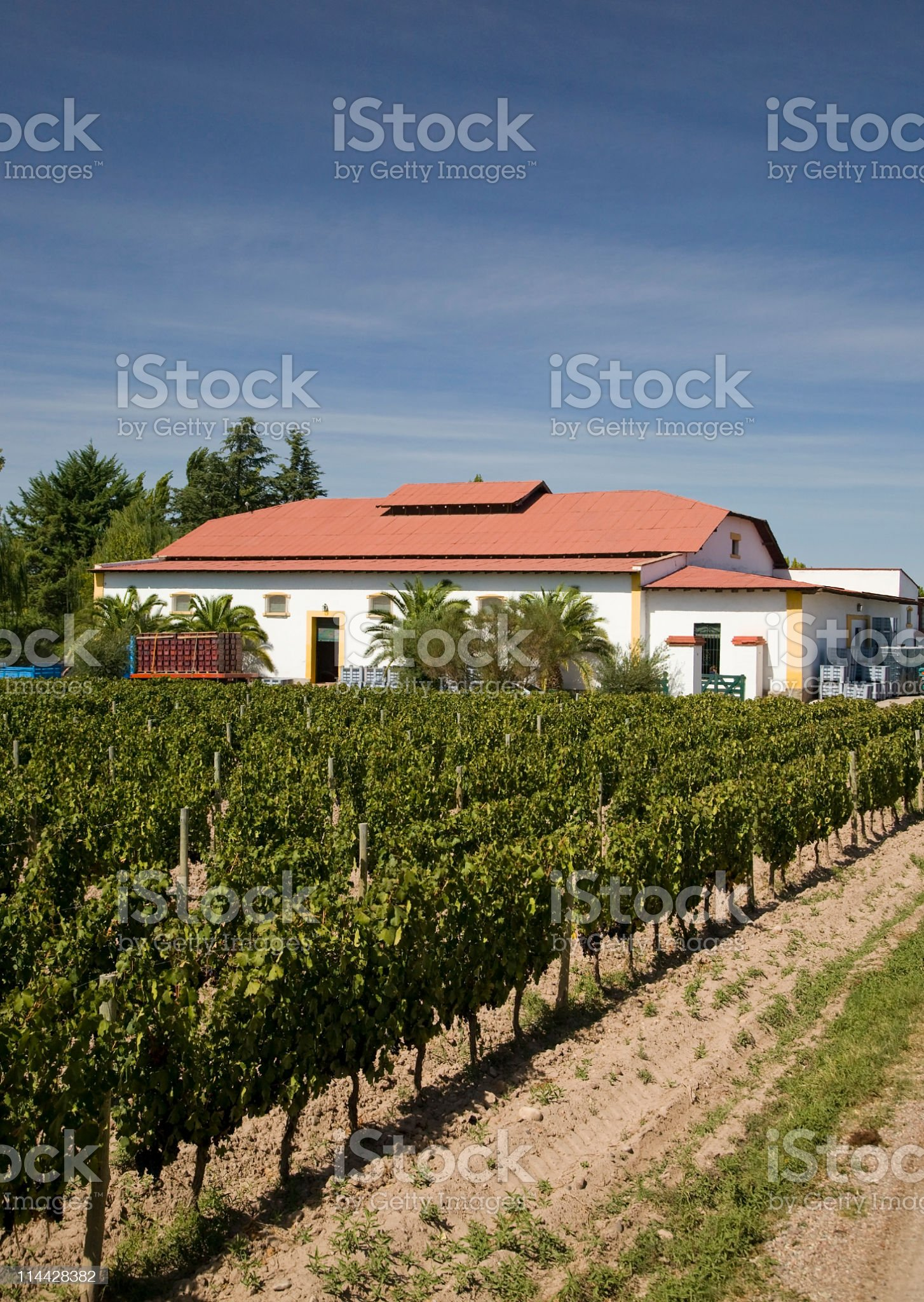 Winery and vineyards in Mendoza royalty-free stock photo