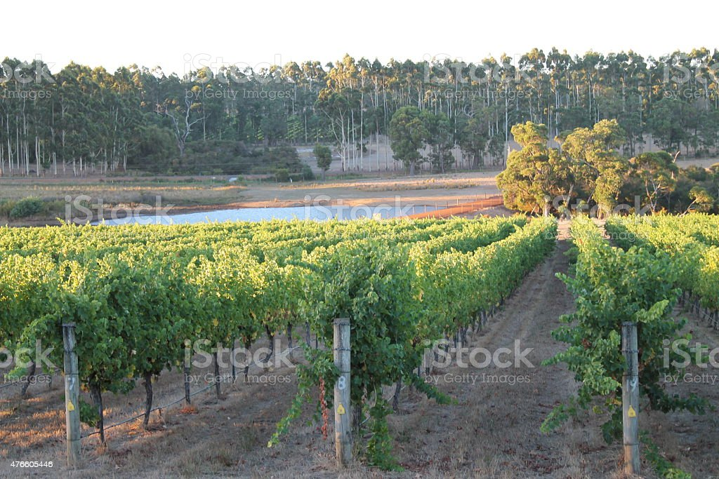 Winery at Margaret River, Western Australia stock photo