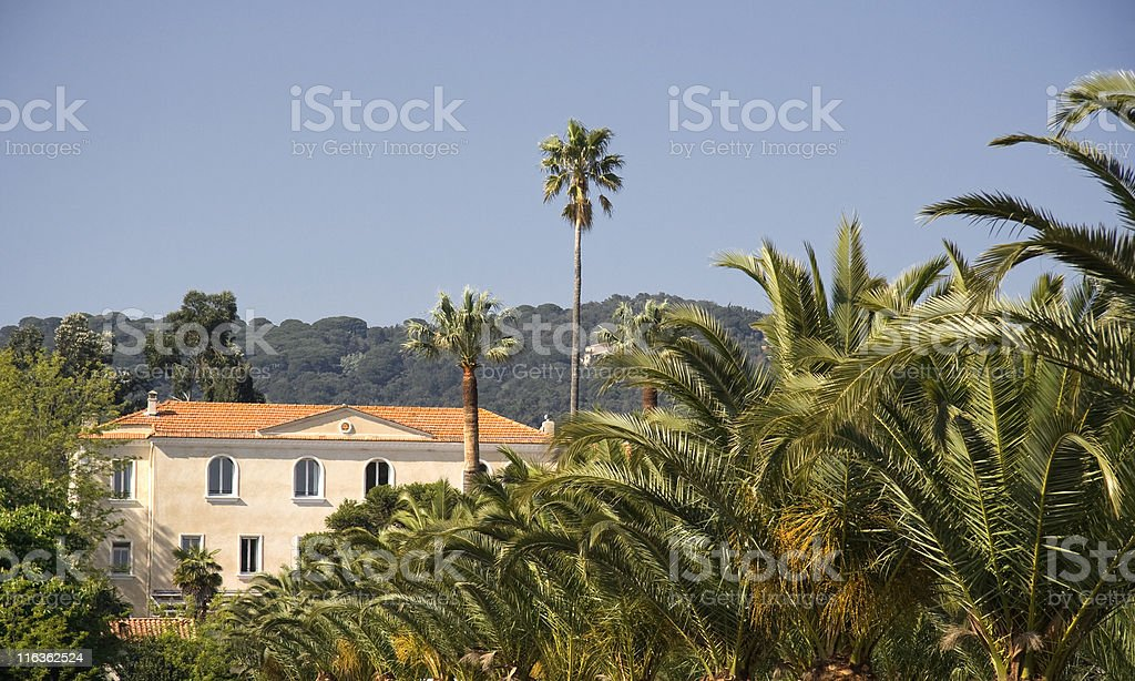 winery behind palm trees royalty-free stock photo