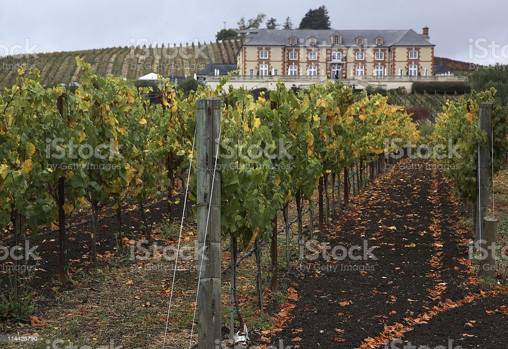 Winery in Carneros stock photo