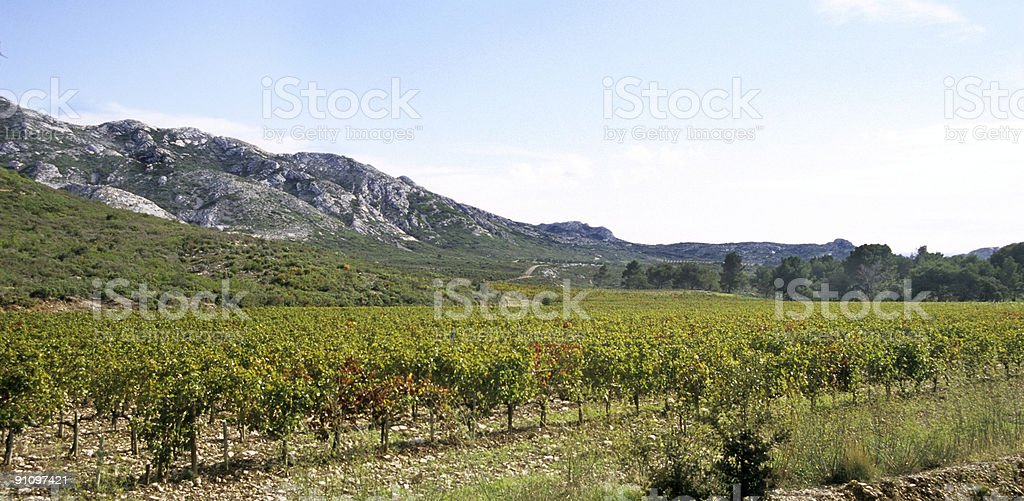 Winery in Southern France stock photo