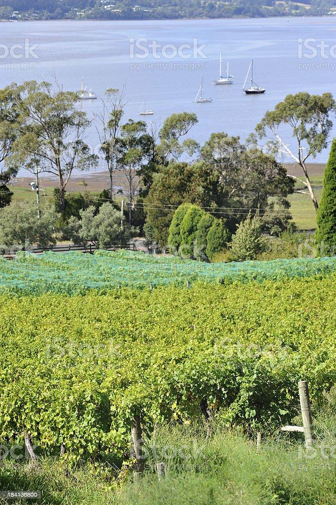 Winery in Tamar Valley,Tasmania, stock photo