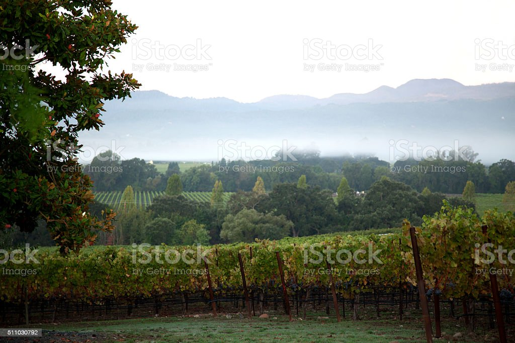 Winery landscape stock photo