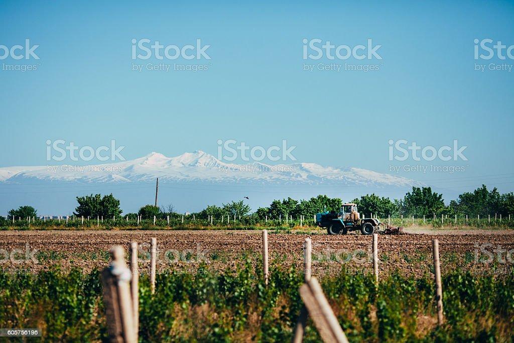Winery on the background of Ararat stock photo