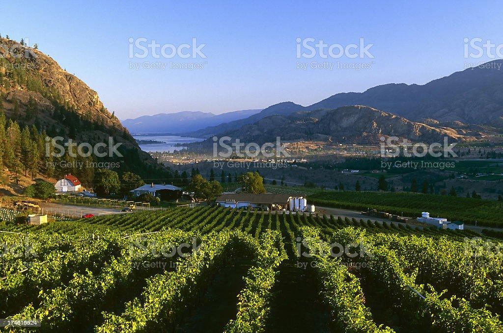 winery rural scenic lake stock photo
