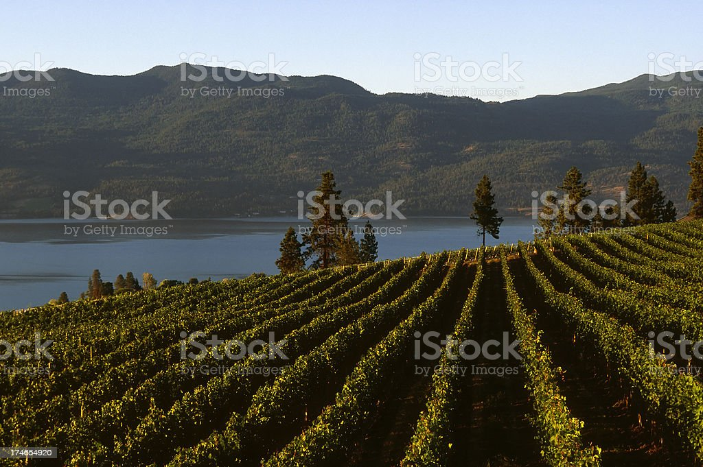 winery rural scenic lake royalty-free stock photo