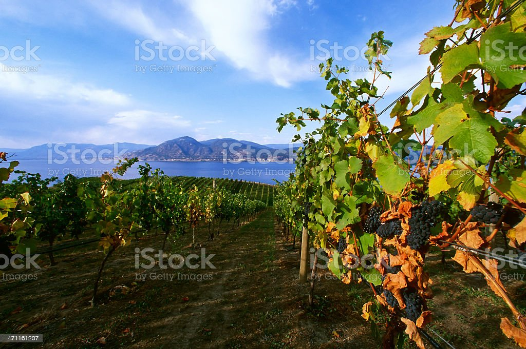 winery rural scenic lake stock photo