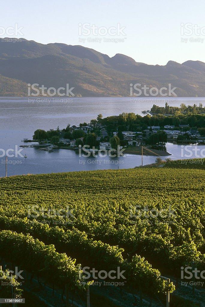 winery vineyard kelowna agriculture okanagan valley royalty-free stock photo