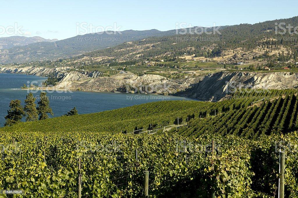 winery vineyard naramata okanagan valley stock photo