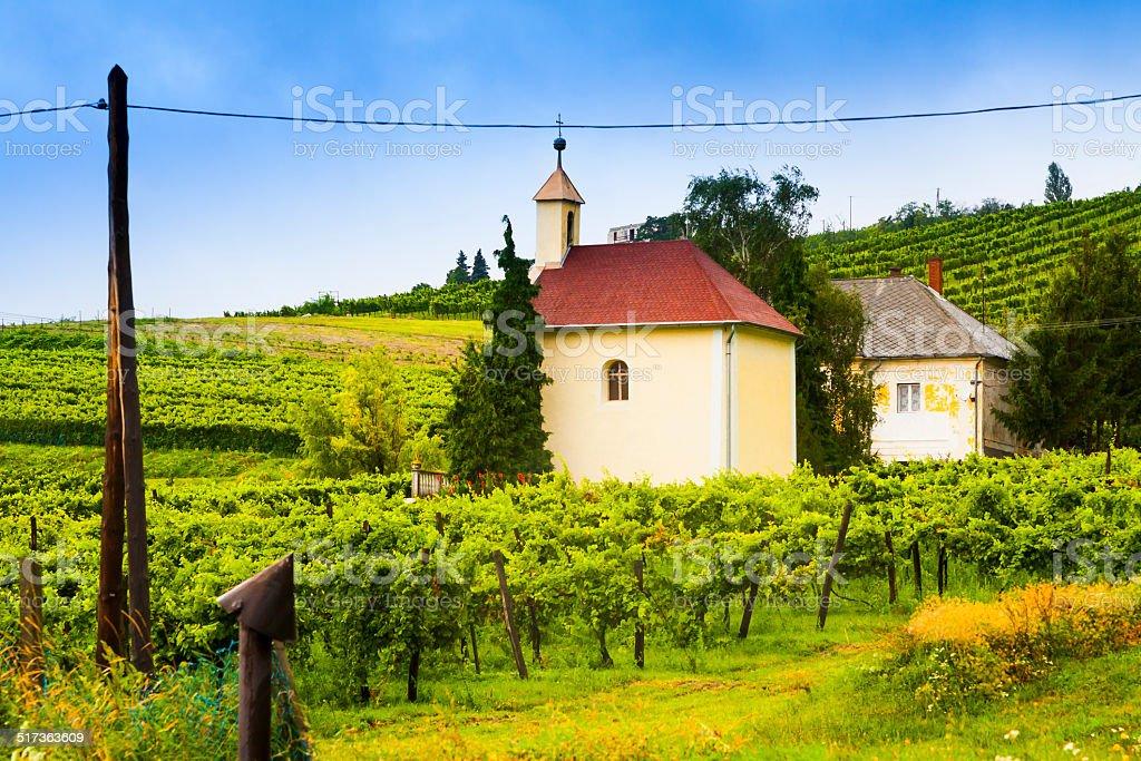 Winery, wine landscape. stock photo