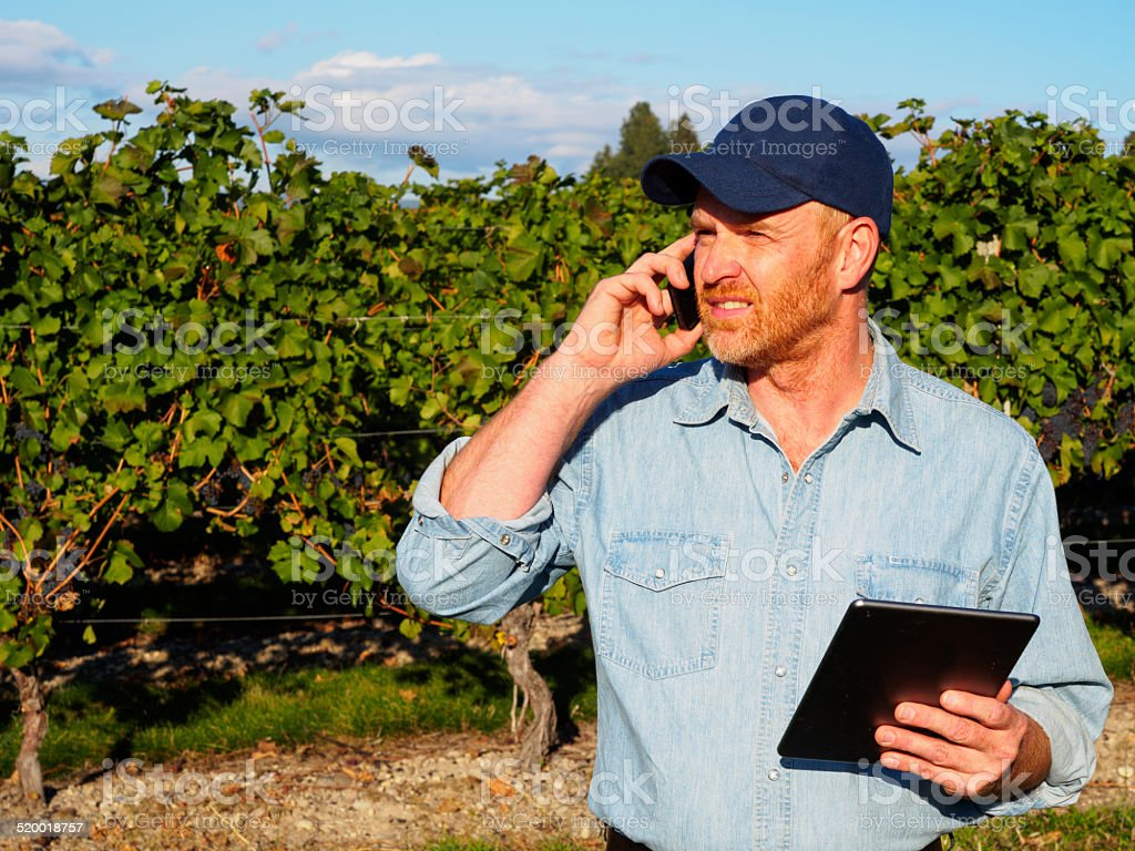 Winery Worker and Technology stock photo