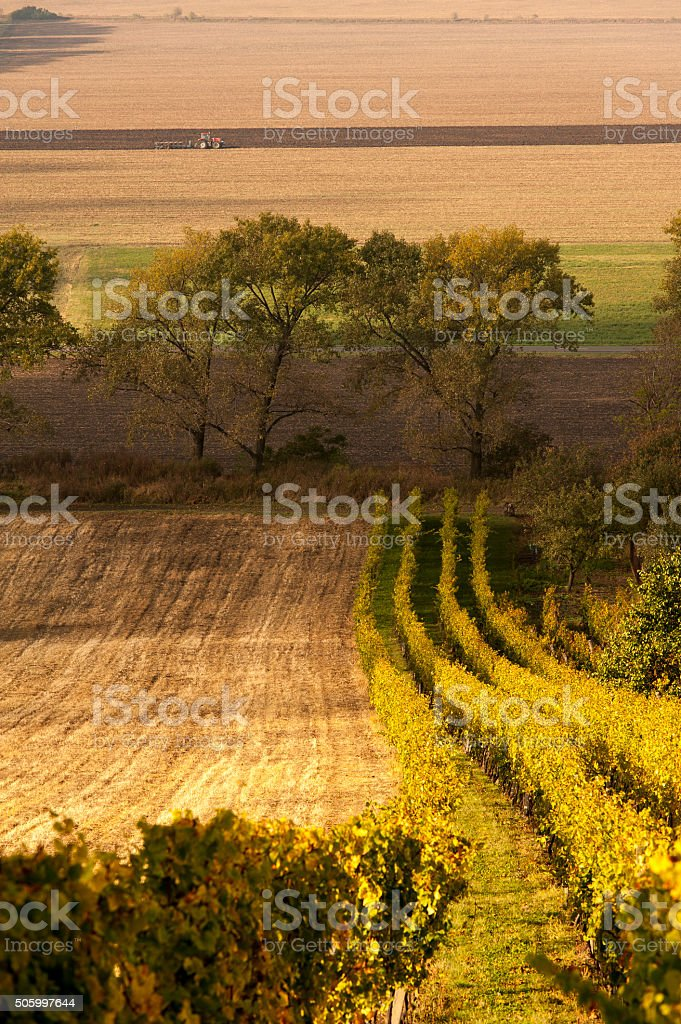 Wineyard and Tractor stock photo
