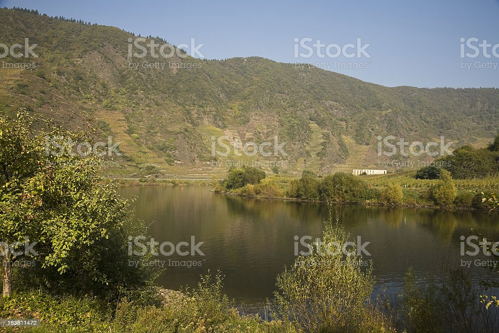 Wineyard at Moselle valley stock photo
