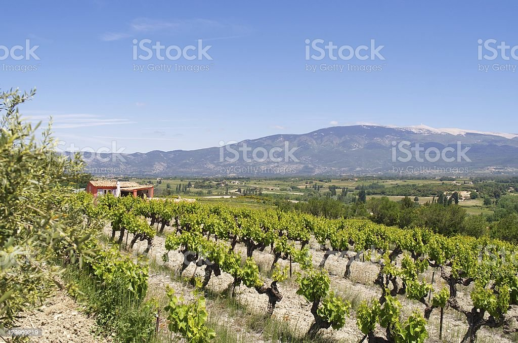 Wineyard in South of France stock photo