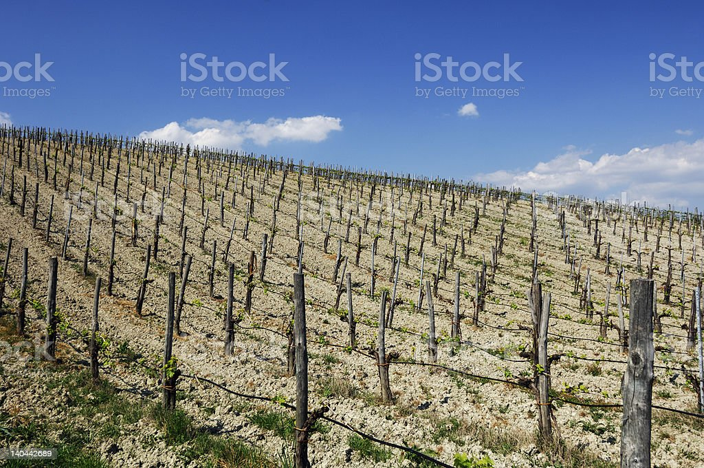 wineyard landscape royalty-free stock photo