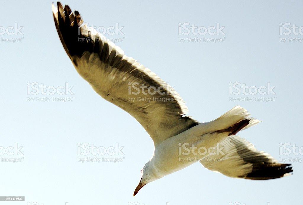 Wing Span stock photo