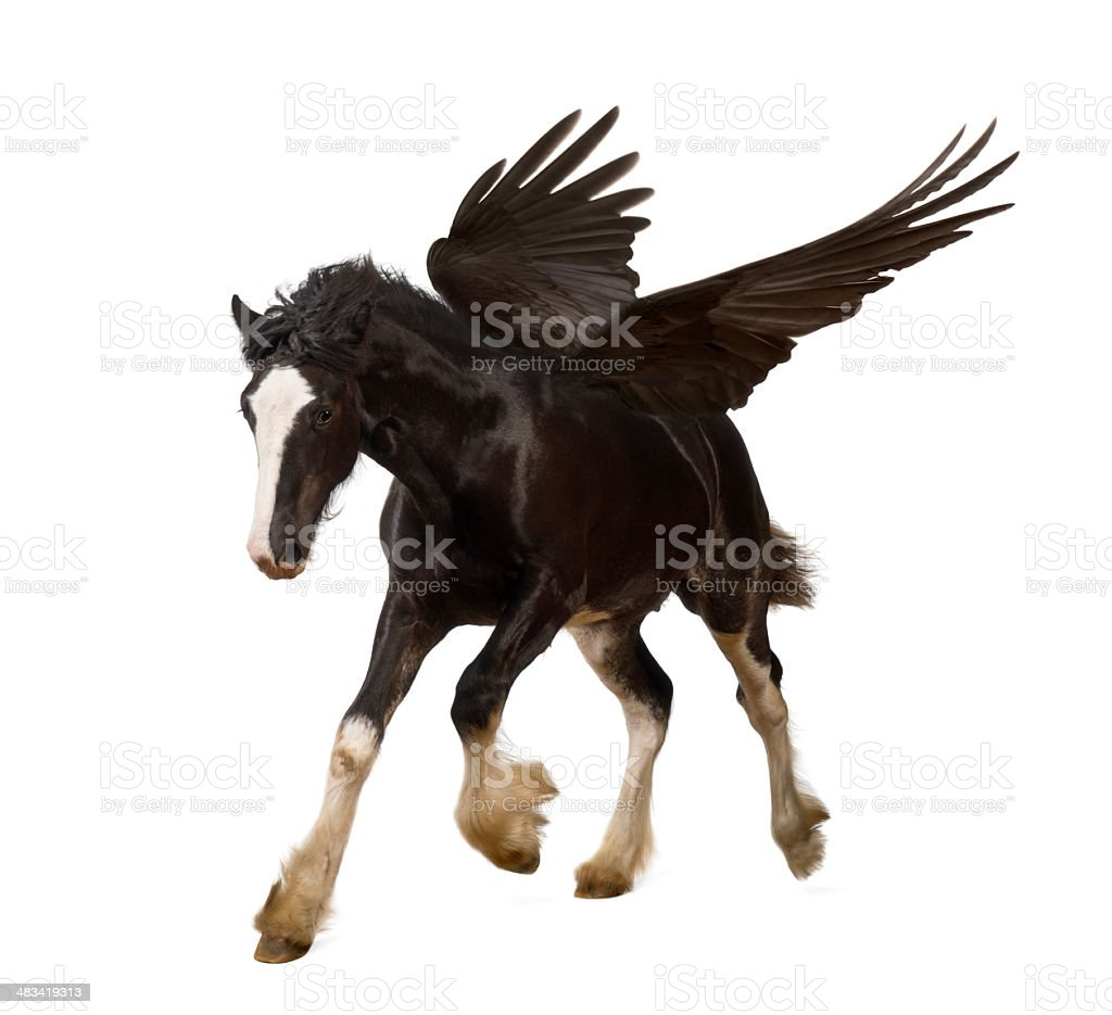 Winged stallion (Pegasus) galloping stock photo