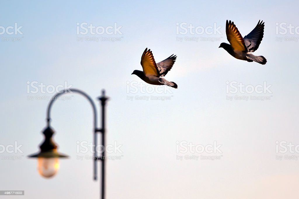 Wings in the wind stock photo