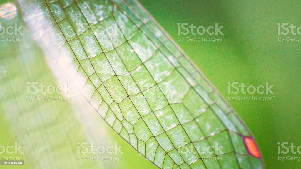 Wings of a damselfly stock photo