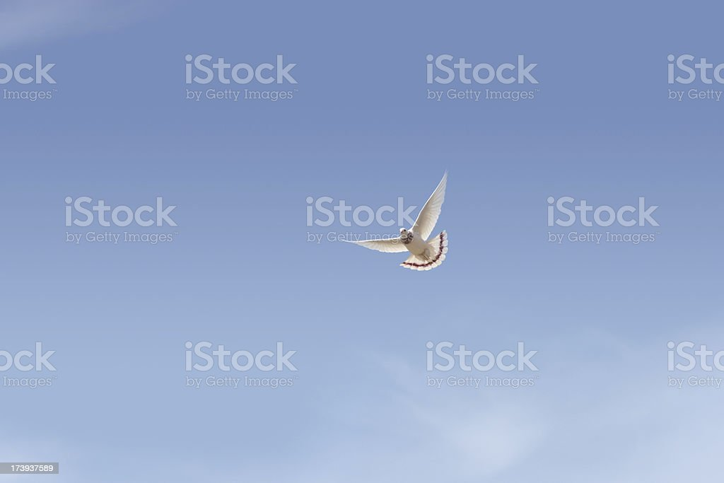 Wings Of Freedom! royalty-free stock photo