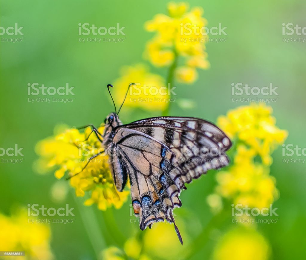 Wings of summer stock photo
