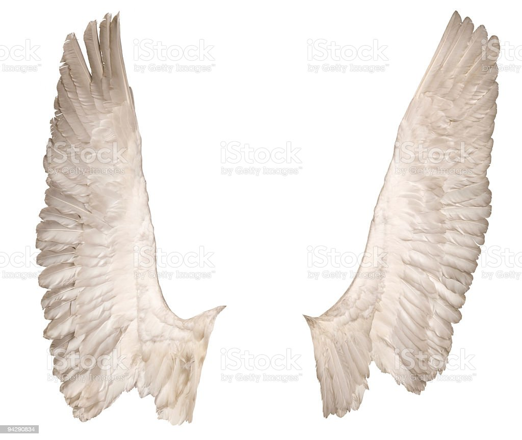 wings over white, front view royalty-free stock photo