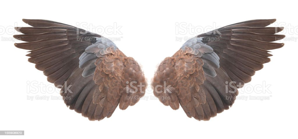 Wings royalty-free stock photo