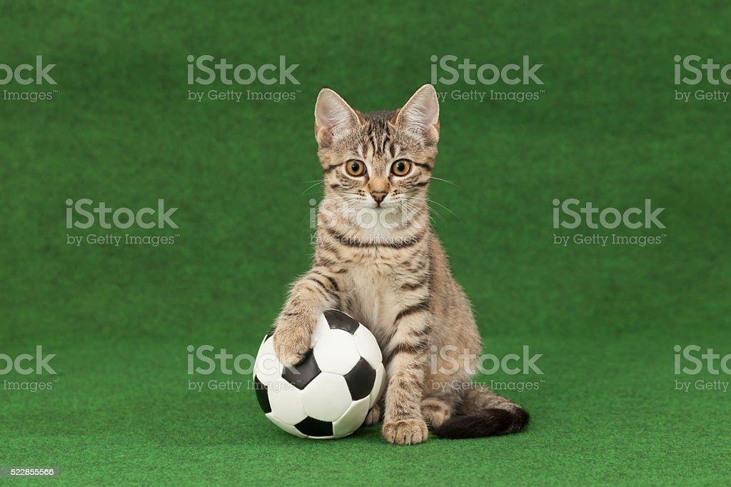 winner cat stock photo