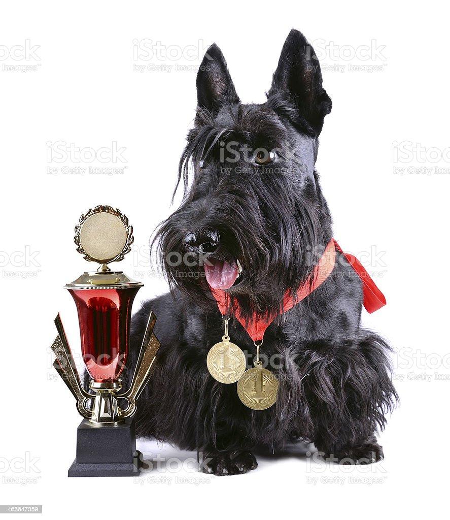Winner dog stock photo