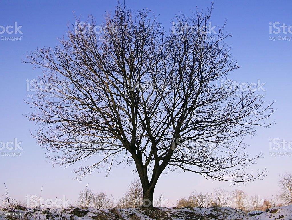 Winter [1] Tree royalty-free stock photo