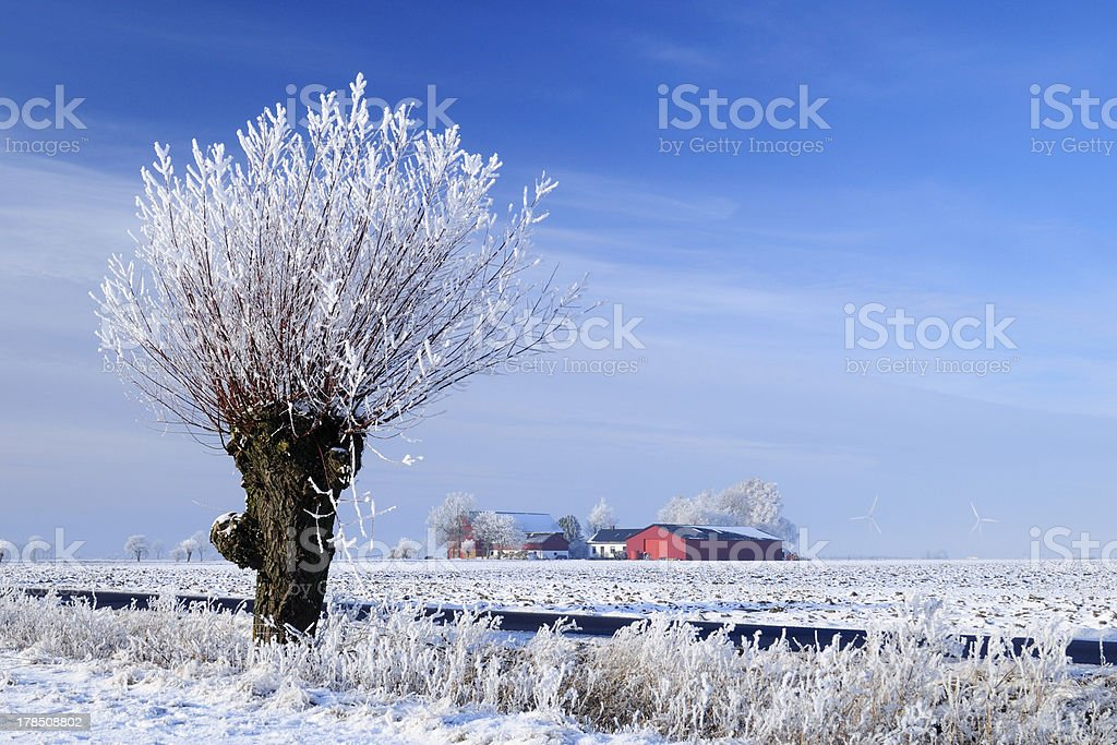 Winter agricultural landscape with snow and blue sky stock photo