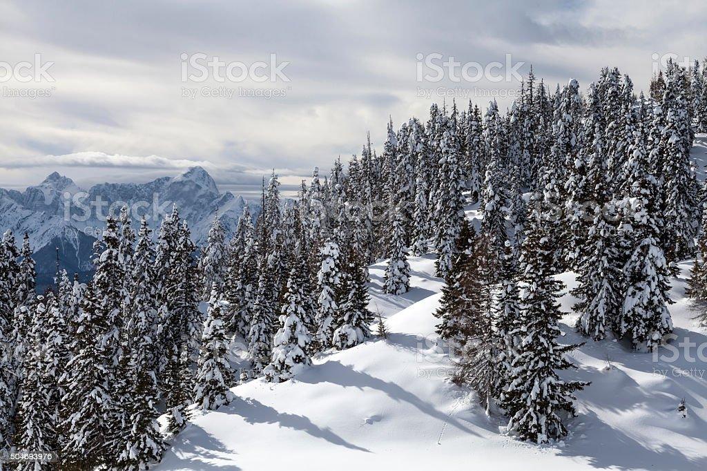 Winter am Dobratsch stock photo