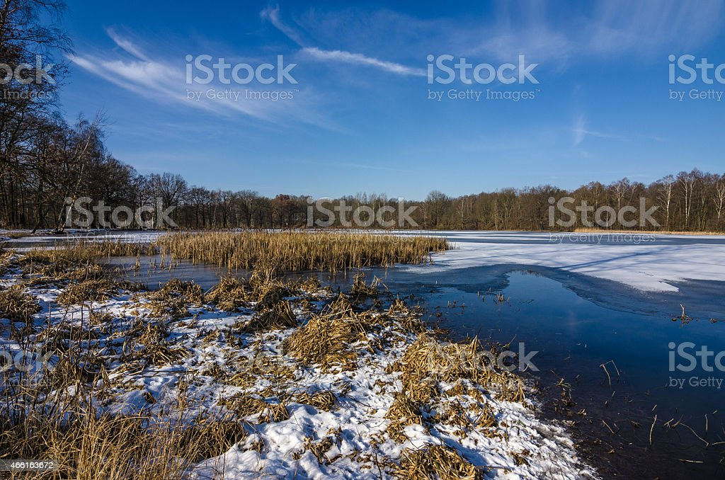 Winter am See stock photo