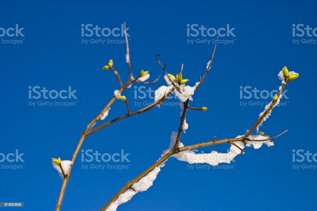 Winter and Spring royalty-free stock photo