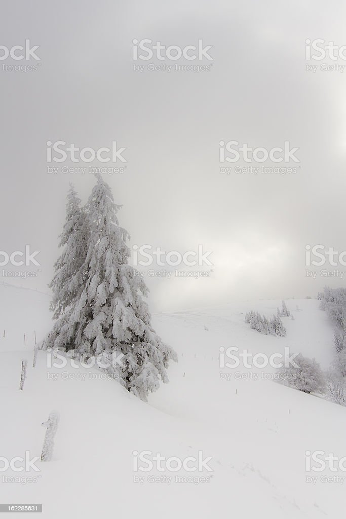 winter atmosphere with snowy fir tree royalty-free stock photo