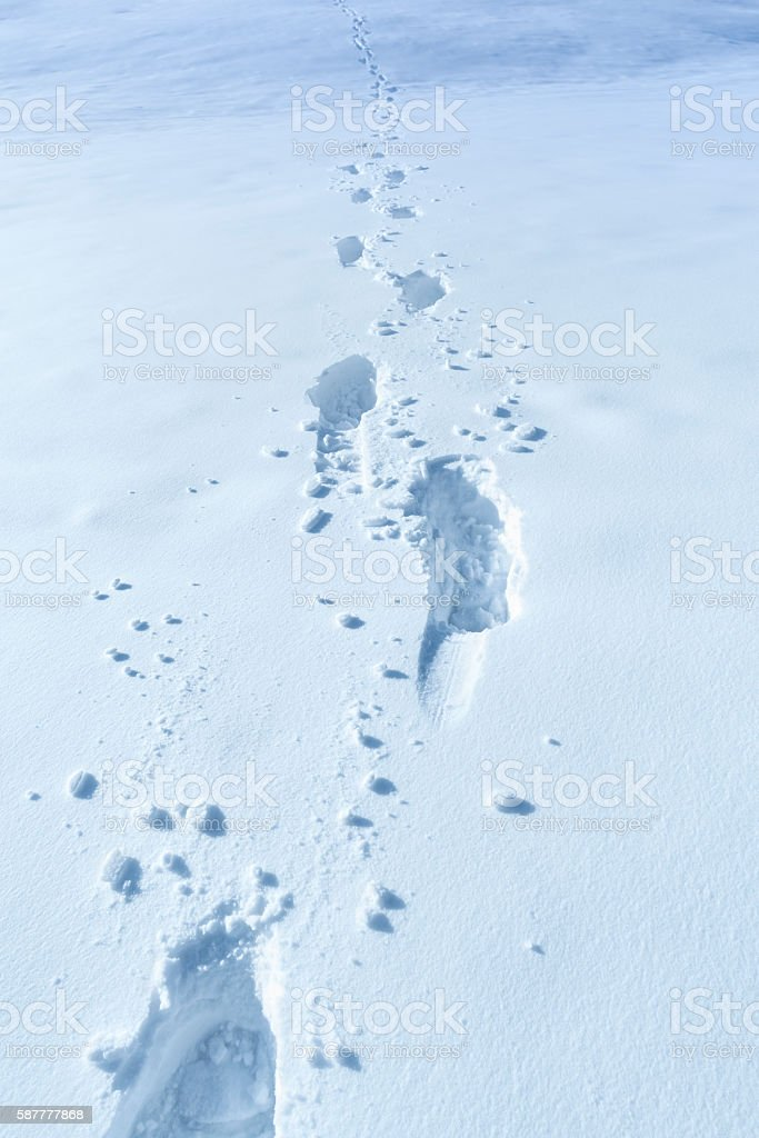 Winter background with footprints in the snow stock photo