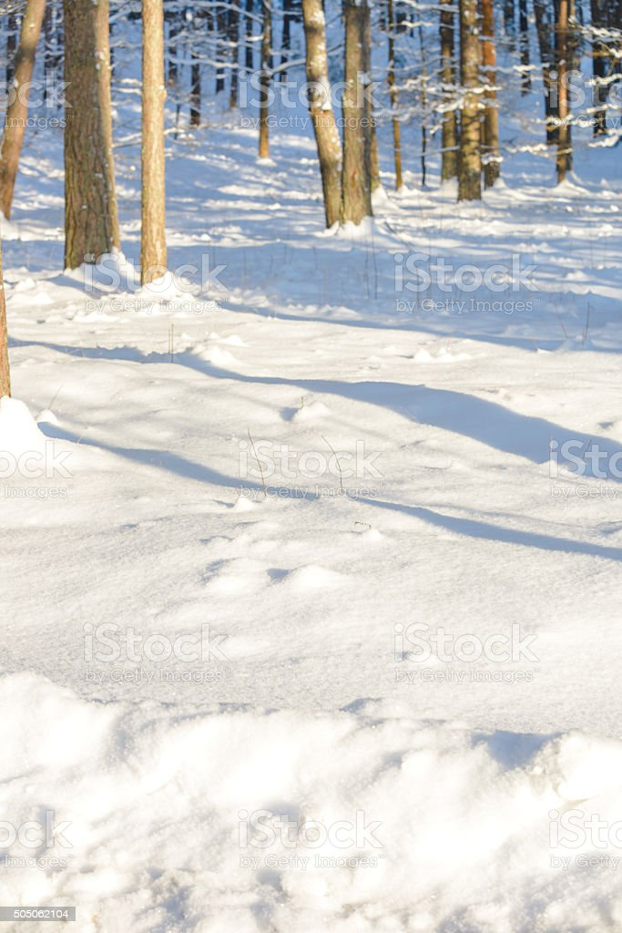 Winter background with forest stock photo