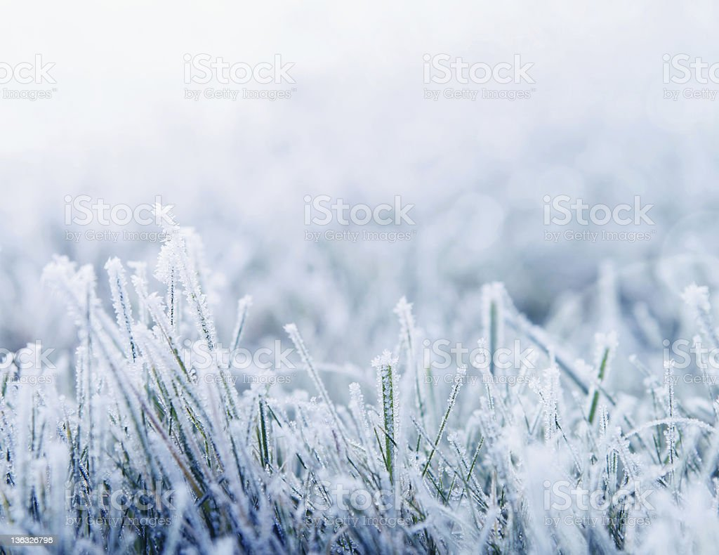 Winter background with snowy grass stock photo
