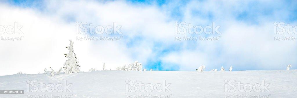Winter barren landscape stock photo