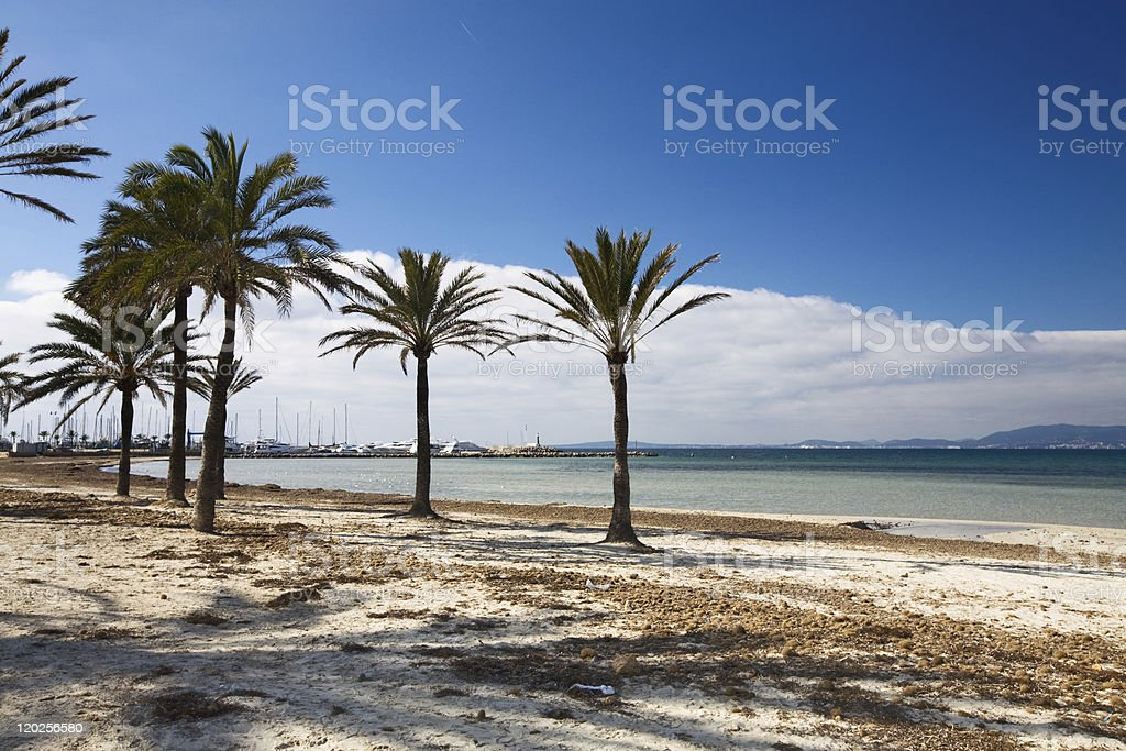 Winter beach royalty-free stock photo