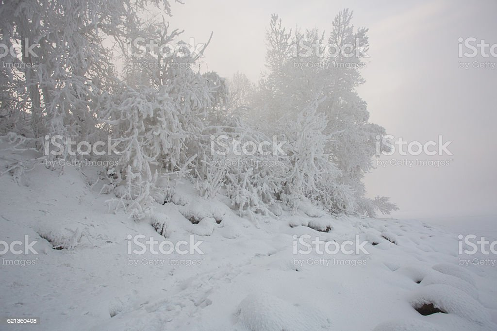 Winter beautiful landscape with trees covered with hoarfrost royalty-free stock photo