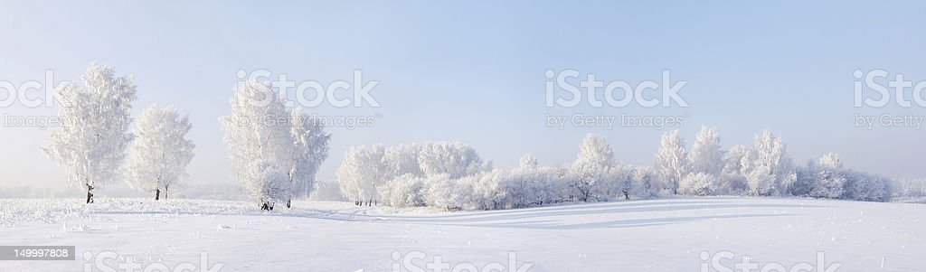 Winter beautiful panorama with trees covered by hoarfrost